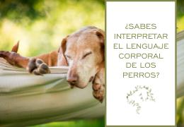 Lenguaje corporal de los perros: aprende a interpretarlo