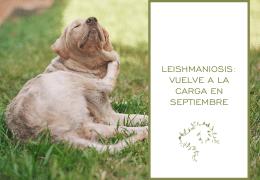 Leishmaniosis: vuelve a la carga en septiembre