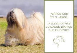 Perros con pelo largo: ¿necesitan más cuidados diarios que el resto?