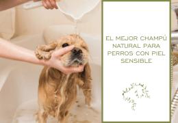 El mejor champú natural para perros con piel sensible