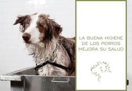 La buena higiene de los perros mejora su salud