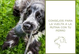 Consejos para la vuelta a la rutina con tu perro